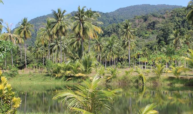 Jungle in Northern Thailand
