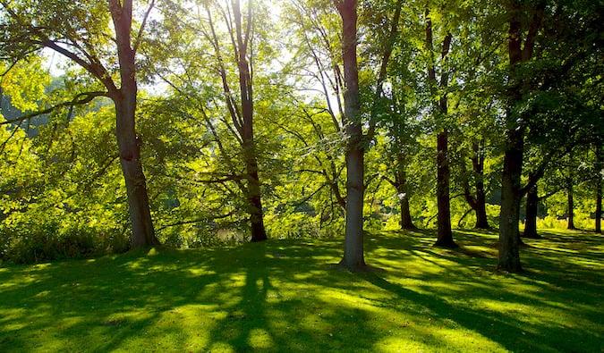 Rembrandt Park's path on a crisp autumn day
