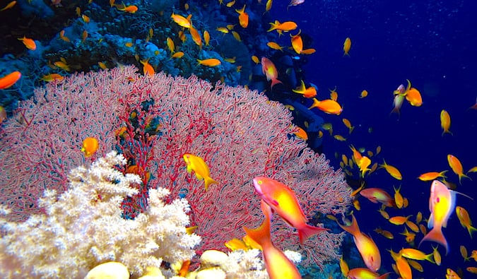 Red Sea Scuba Diving