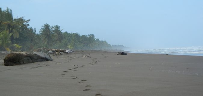 beaches in the northern caribbean of costa rica