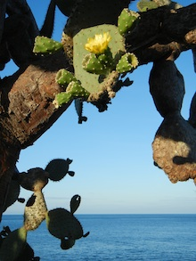 cactus in the Galapagos Islands