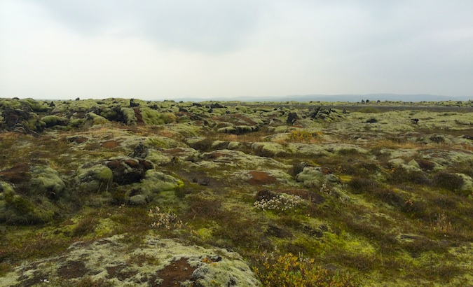 A moss-covered lava field in southern Iceland