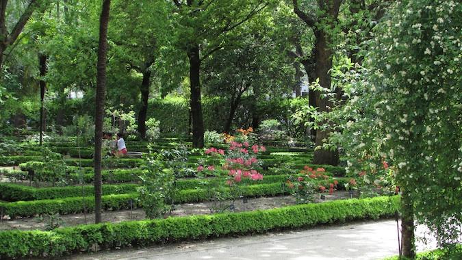 madrid's famous botanical garden