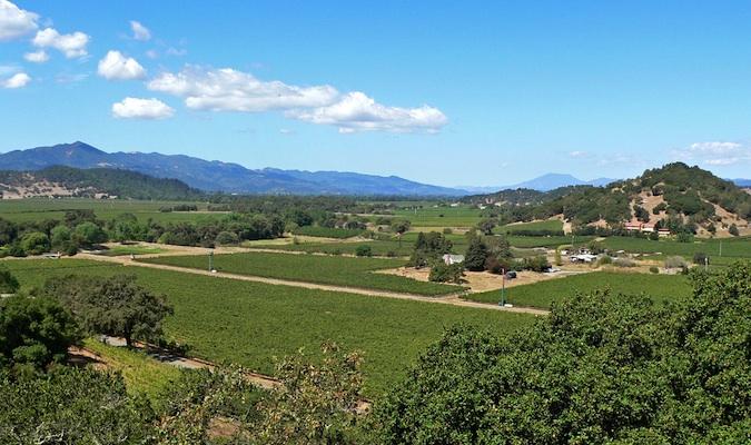 the beautiful vineyards of napa