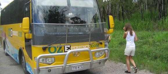 oz backpacker buses