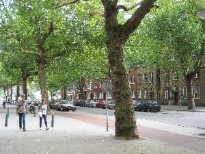 The treelined streets of Rotterdam, in the Netherlands
