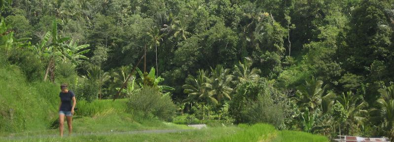 the fields of bali and jungle