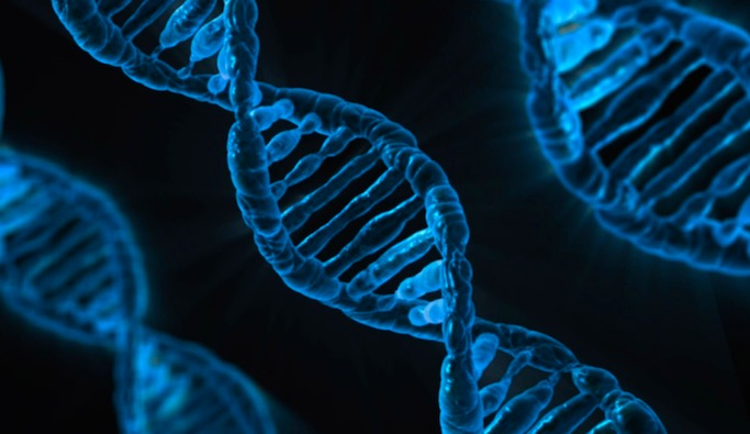 A DNA sequence