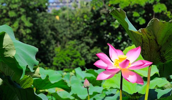 taipei botanical gardens