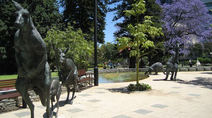 beautiful perth kangaroos
