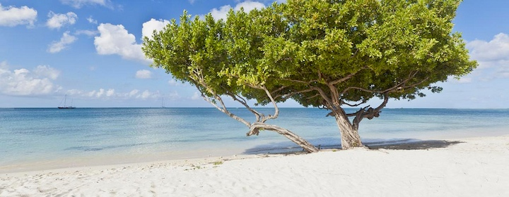 Laying on the beautiful beaches on the island of Aruba