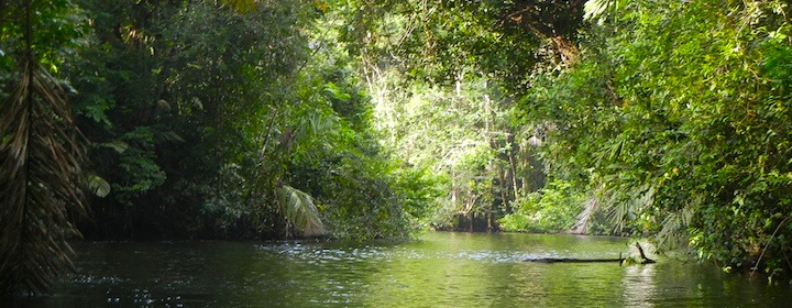 Visiting the region of turtles, or Tortuguero in the jungle of Costa Rica
