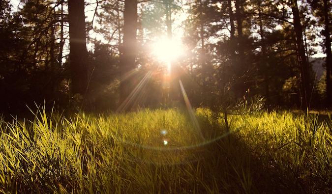 """""""sunlightshiningthroughgrass""""/"""