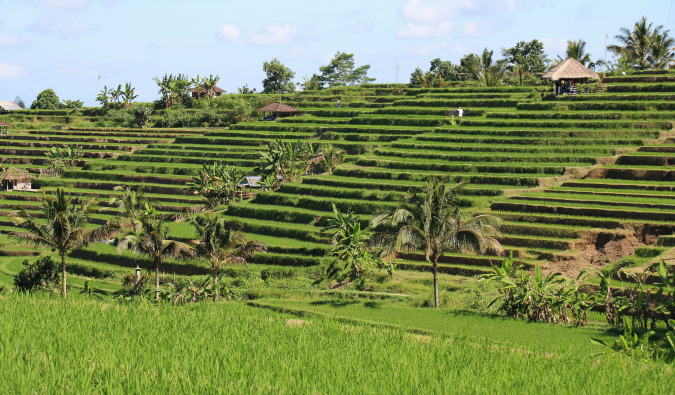 The green Jatiluwih rice terraces of Indonesia