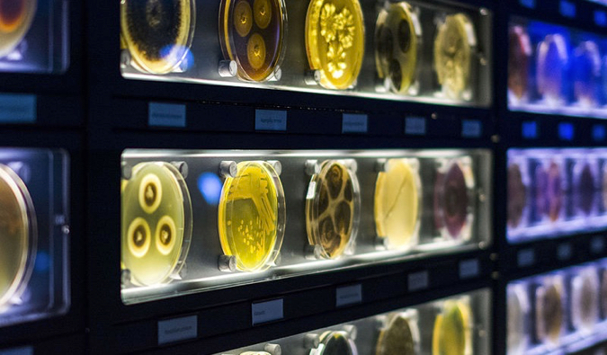 microbes and bacteria up close at Micropia in Amsterdam