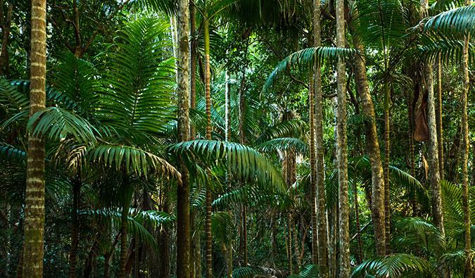 cape tribulation jungles