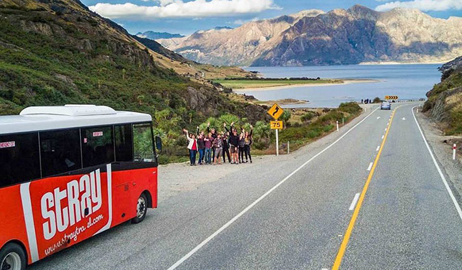 Stray Bus, New Zealand
