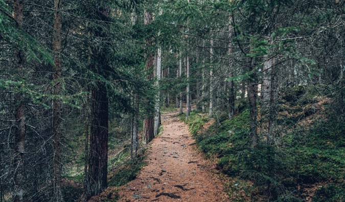 a green forested hiking trail in Austria