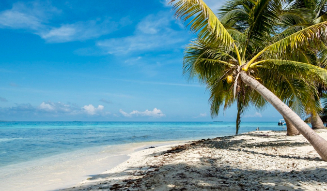 An empty beach in Belize with a leaning palm tree beside the ocean