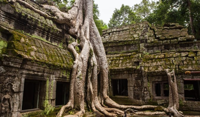 A tree growing around a temple at Angkor Wat in Cambodia
