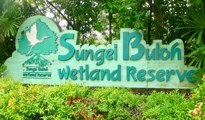 The Sungei Buloh Wetland Reserve in Singapore