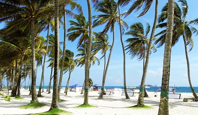 swaying palm trees on a white sand beach in San Andrés Islands