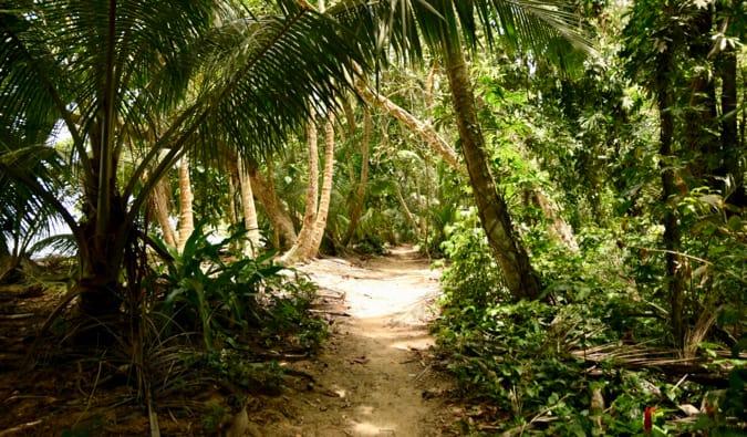 The a path through the lush jungles of Tortuguero in Costa Rica