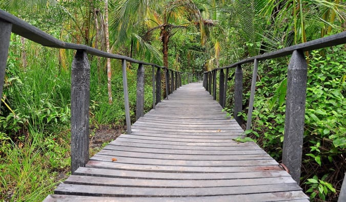 A wooden boardwalk through the jungles and beaches of Cahuita, Costa Rica