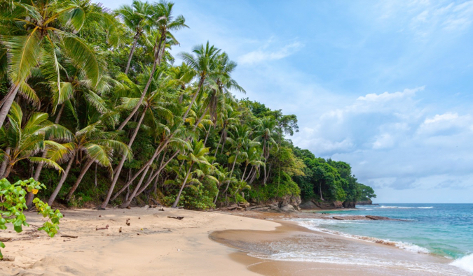 A gorgeous empty beach surrounded by palm trees in Central America