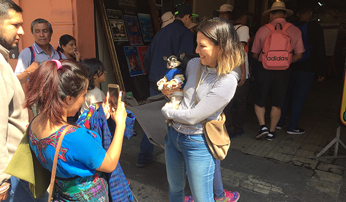 Boogie the pug getting lots of attention in Guatemala