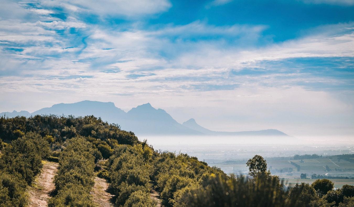 A lush green vineyard in Stellenbosch, Cape Town, South Africa