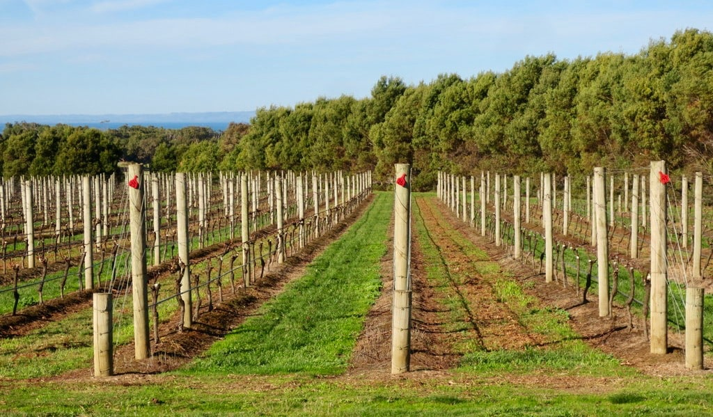 A lush and picturesque vineyard near Melbourne, Australia