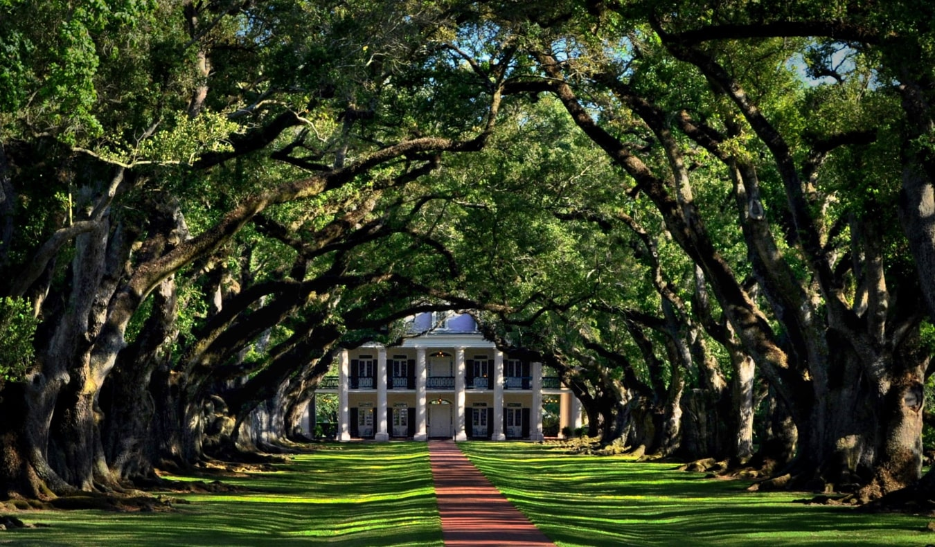 The tree-lined path towards Oak Alley plantation near New Orleans, USA