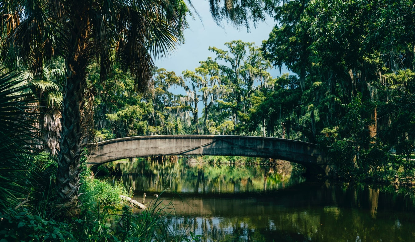 The lush foliage of New Orleans City Park in New Orleans, USA