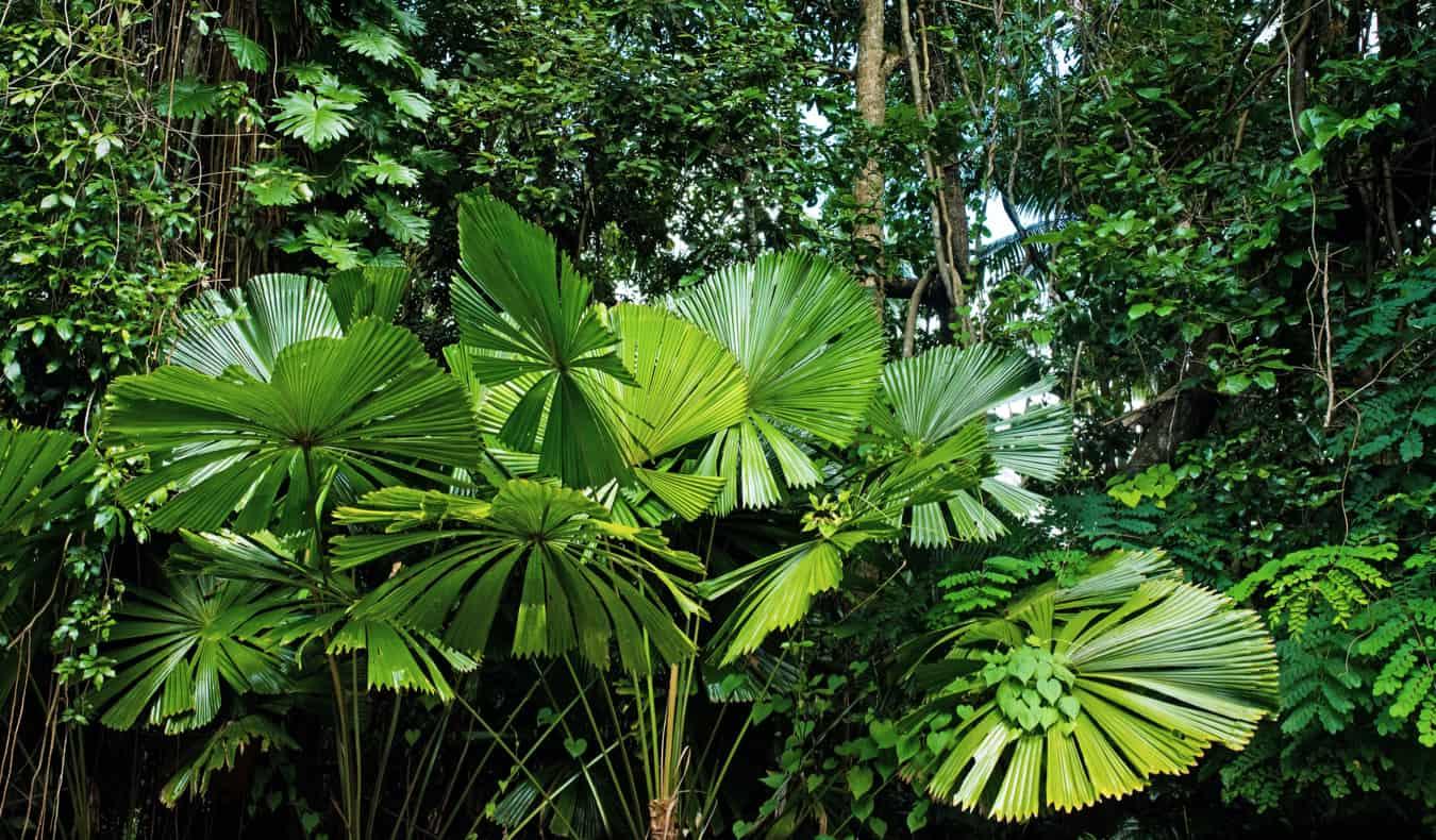 The lush green jungles of Australia