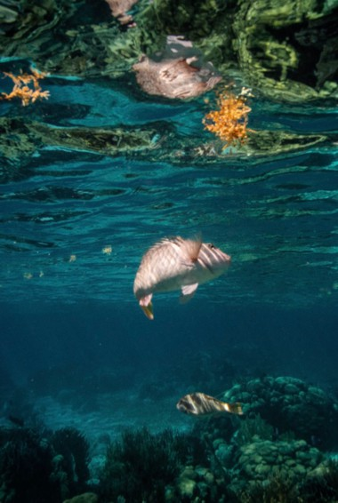 Some fish swimming underwater in Placencia, Belize