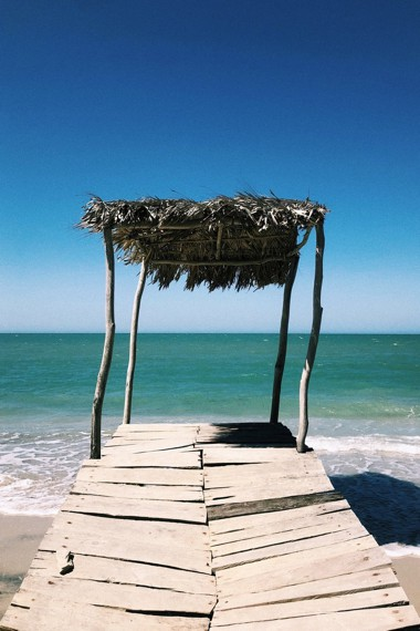 A palm tree on the beach at Riohacha in Colombia