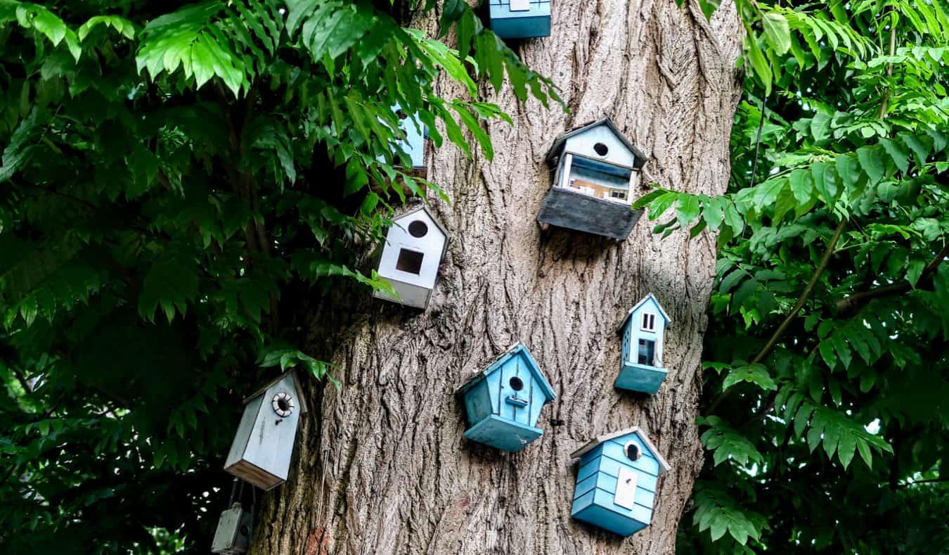 Birdhouses on a tree in Vondelpark, Amsterdam