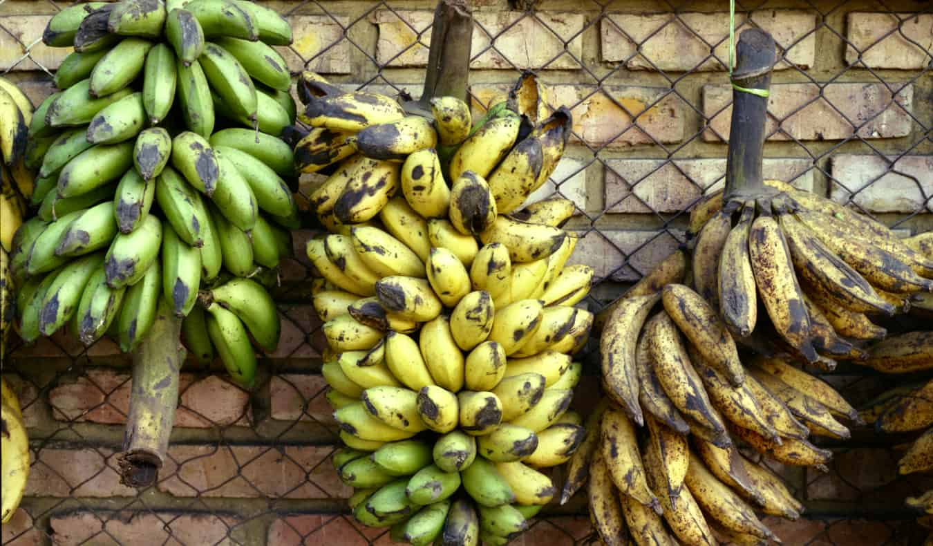 Bunches of bananas in Bogota, Colombia