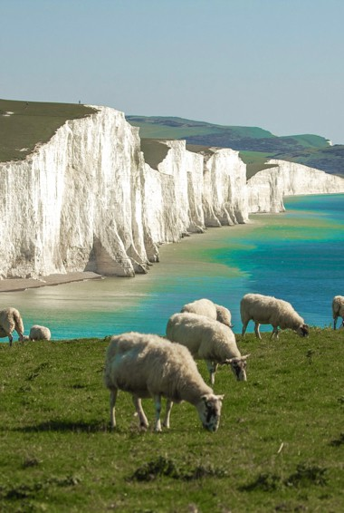 Sheep grazing at Seven Sisters in Brighton, UK