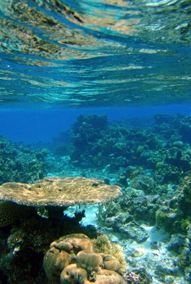 The clear waters of the Cook Islands