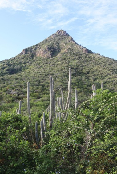 Christoffelberg and the surrounding nature in Curacao