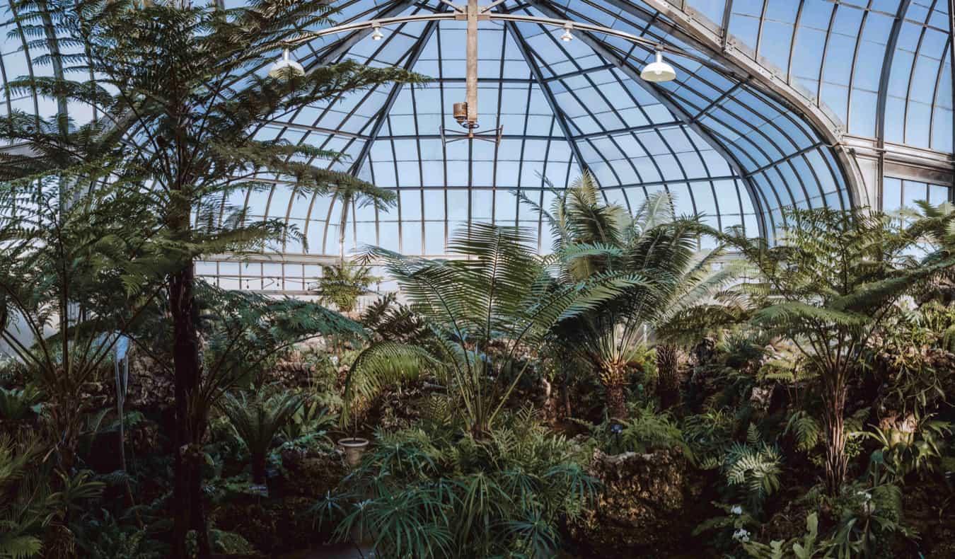 Inside a greenhouse on Belle Island in Detroit, USA