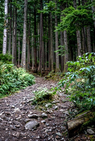 A trail up Grouse Mountain in Vancouver, Canada