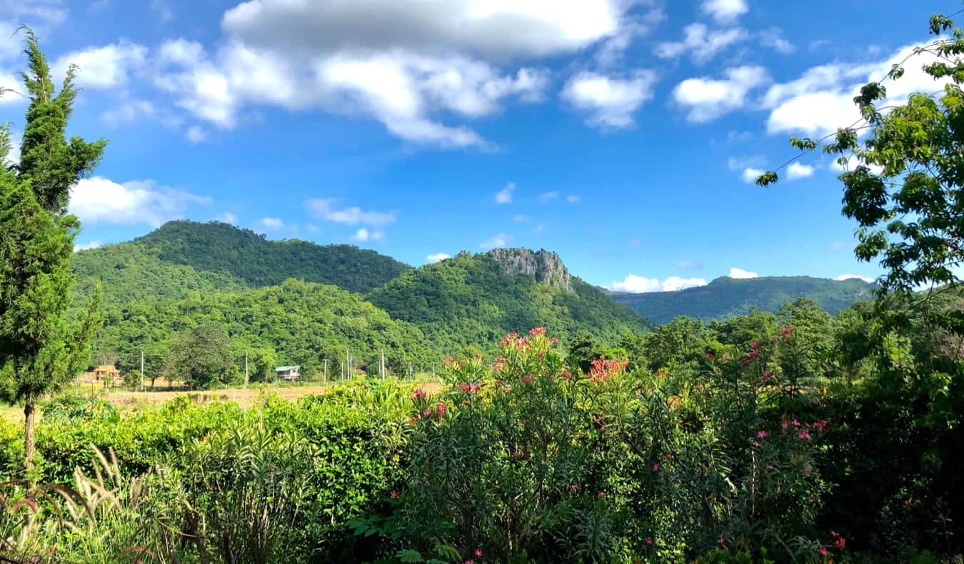 Lush trees and jungle in Khao Yai National Park in Thailand