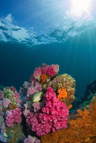 The calm waters of Ko Lipe, Thailand