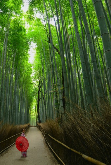 The bamboo forest in Kyoto, Japan