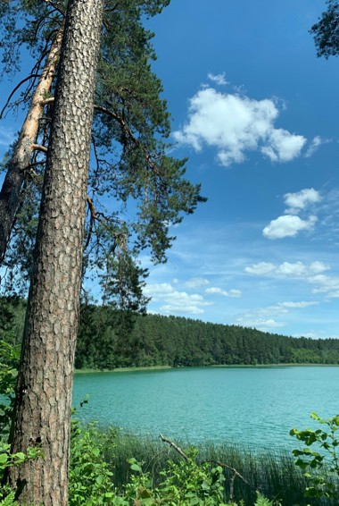 A lake and trees in Trakai NAtional Park in Lithuania