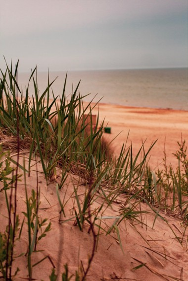 The sand dunes of the National Park of the Curonian Spit