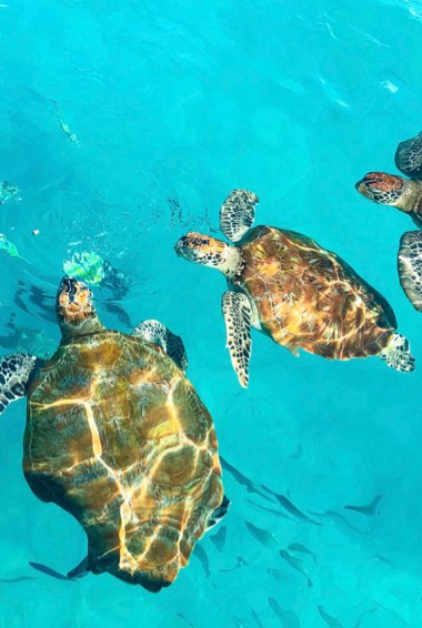 swimming with sea turtles in the Perhentian Islands